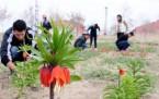 Yeni çeşit lalelere Kürtçe isim