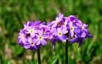 Hakkari dağları çiçeklerle süslendi
