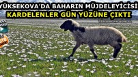 Yüksekova'da Baharın Müjdeleyicisi Kardelenler Gün Yüzüne Çıktı