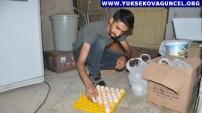 Yüksekovalı Genç Hurdacıdan Aldığı Buzdolabından Yaptırdığı Kuluçka Makinesiyle Civciv Üretiyor