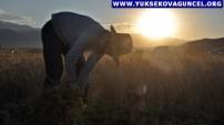Yüksekova'da Kavurucu Sıcakların Altında Kış Hazırlığı