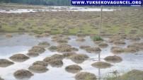 Yüksekova'da Sel Felaketi: 10 Bin Bağ Ot Ve Bahçeler Zarar Gördü