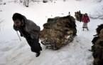 Kar altında ot taşıma çilesi