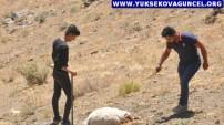 Hakkari: 2 Gündür Dağ Taş Demeden Kayıp Koyunlarını Arıyorlar