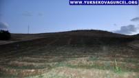 Yüksekovalı 6 Girişimci, Köylerindeki 15 Bin Dönümlük Tapulu Araziyi Meşe Ağacına Çevirdi
