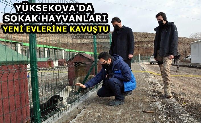 Yüksekova'da Sokak Hayvanları Yeni Evlerine Kavuştu
