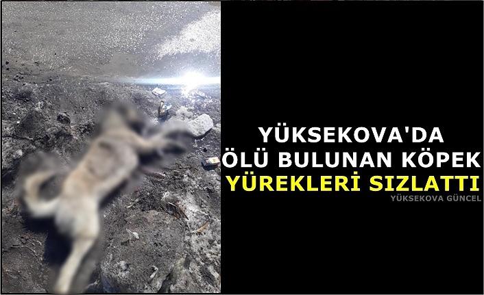 Yüksekova'da ölü bulunan köpek yürekleri sızlattı