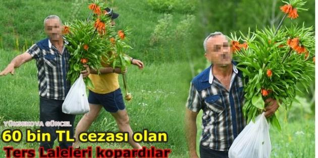 60 bin TL cezası olan Ters Laleleri kopardılar