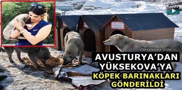 Avusturya'dan Yüksekova'ya Köpek Barınakları Gönderildi