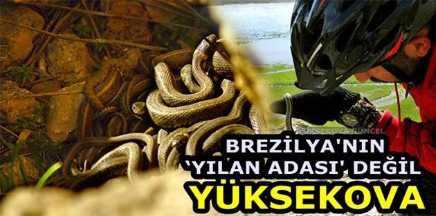 Brezilya'nın 'Yılan Adası' değil Yüksekova