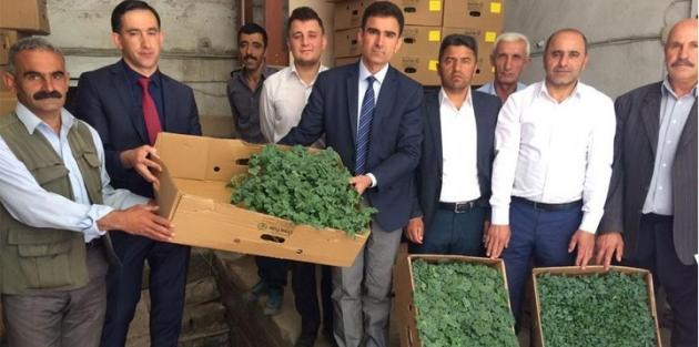 Hakkari'de çiftçilere 102 bin adet sebze fidesi dağıtıldı