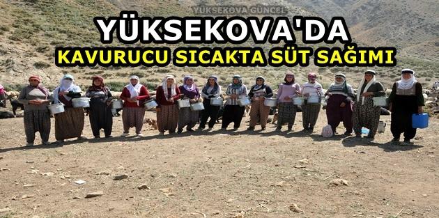 Yüksekova'da Kavurucu sıcakta süt sağımı