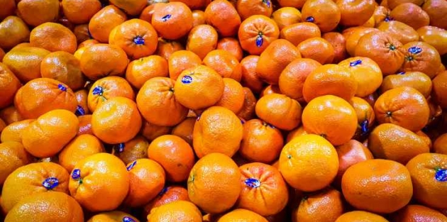 Rusya mandalinaları geri gönderdi