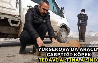 Yüksekova'da aracın çarptığı köpek tedavi altına alındı