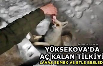 Yüksekova'da aç kalan tilkiyi lavaş ekmek ve etle besledi