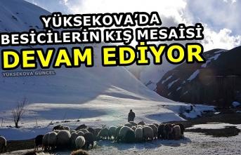 Yüksekova'da besicilerin kış mesaisi devam ediyor