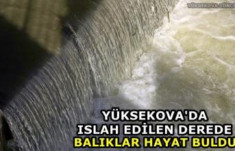 Yüksekova Deresinde Islah Çalışmalarından Sonra Balıklar Hayat Buldu