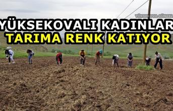 Yüksekovalı Kadınlar Tarıma Renk Katıyor