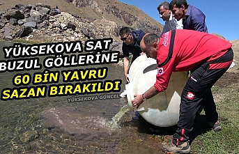 Yüksekova Sat Buzul Göllerine 60 Bin Yavru Sazan Bırakıldı