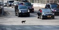 Cumhurbaşkanlığı Sarayı'nda kaç araç var?
