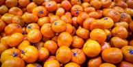 Rusya mandalinaları...