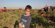 Tarım işçilerinin çocuklarına prefabrik okul