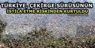 Türkiye, çekirge sürüsünün istila etme riskinden kurtuldu
