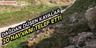 Yüksekova: Dağdan Düşen Kayalar 20 Hayvanı Telef Etti