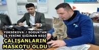 Yüksekova..! Soğuktan iş yerine sığınan kedi, çalışanların maskotu oldu