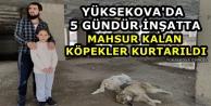 Yüksekova'da 5 Gündür İnşatta Mahsur Kalan Köpekler Kurtarıldı