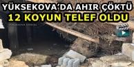 Yüksekova'da Ahır çöktü: 12 Koyun Telef Oldu