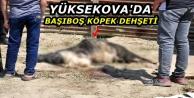 Yüksekova'da başıboş...