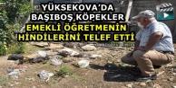 Yüksekova'da Başıboş Köpekler Emekli Öğretmenin Hindilerini Telef Etti