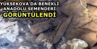 Yüksekova'da Benekli Anadolu Semenderi Görüntülendi