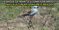 Yüksekova'da Nehir Sazlığının Korunmasıyla, Farklı Kuş Türleri Görülmeye Başladı
