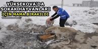 Yüksekova'da Sokak Hayvanları İçin Mama Bırakıldı
