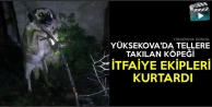 Yüksekova'da Tellere Takılan Köpeği İtfaiye Ekipleri Kurtardı