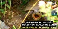 Yüksekovalı Gezgin Öğretmen Kaplumbağanın Esneme Anlarını Görüntüledi