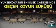 Yüksekova'nın En İşlek Caddesinde Geçen Koyun Sürüsü