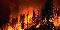 Yunanistan'ın Elis bölgesinde büyük orman yangını