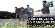 Yüksekova'da 20 Manda Ve 12 Malak Dağıtıldı