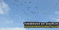 Yüksekova'da Sığırcık kuşlarından görsel şölen
