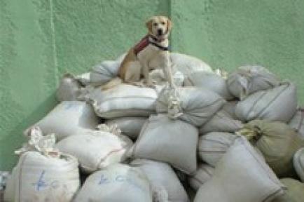 Van'da 5 ton uyuşturucu ele geçirildi