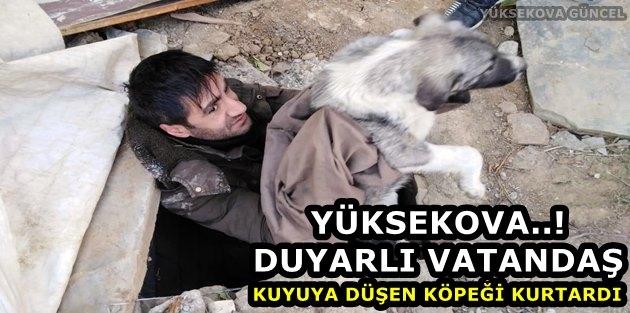 Yüksekova..! Duyarlı Vatandaş Kuyuya Düşen Köpeği Kurtardı