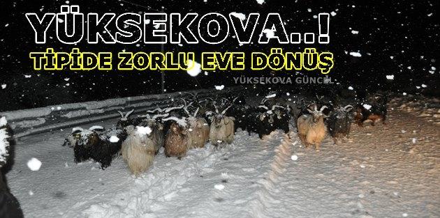 Yüksekova..! Tipide zorlu eve dönüş