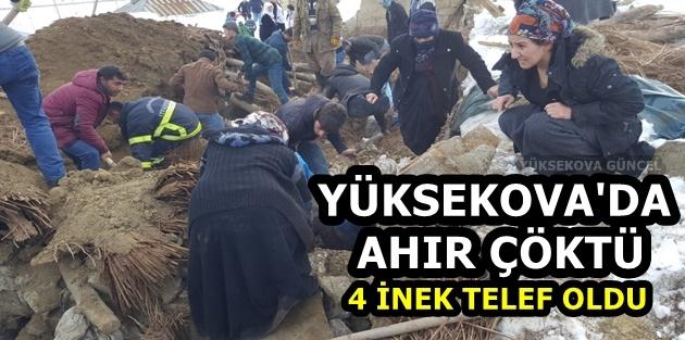 Yüksekova'da ahır çöktü: 4 inek telef oldu