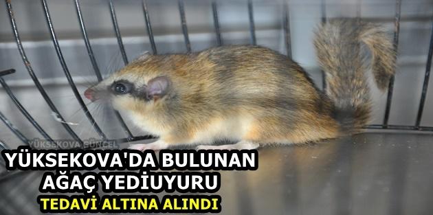 Yüksekova'da Bulunan Ağaç Yediuyuru Tedavi Altına Alındı