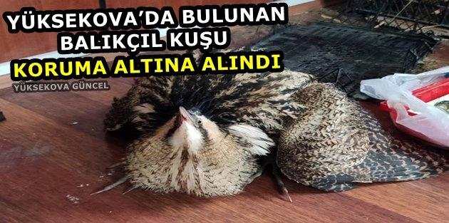 Yüksekova'da Bulunan Balıkçıl Kuşu Koruma Altına Alındı