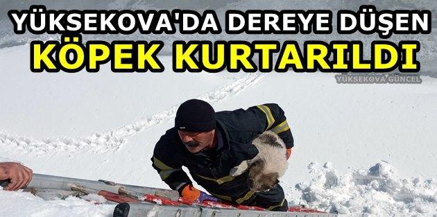 Yüksekova'da Dereye Düşen Köpek Kurtarıldı