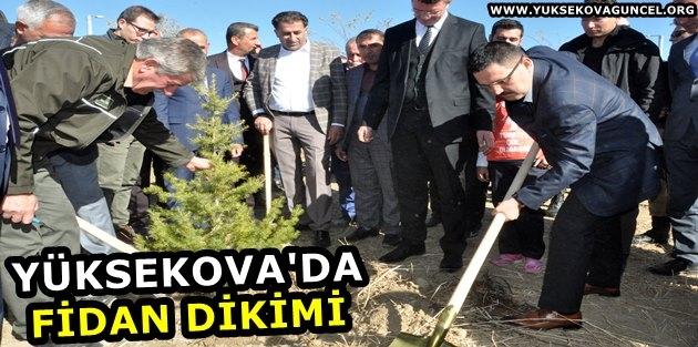 Yüksekova'da fidan dikimi